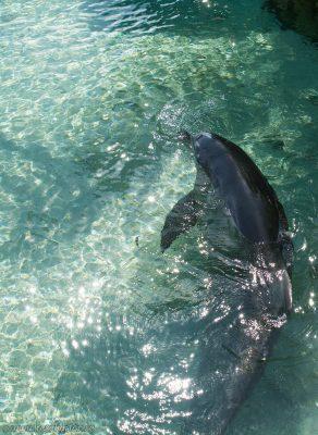 Moorea Dolphin Center