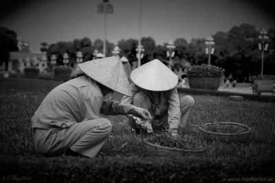 Working with the grass in Hanoi