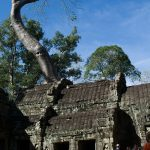 Tree of Ta Prohm
