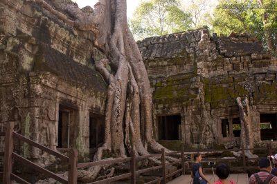 Trees of Ta Prohm