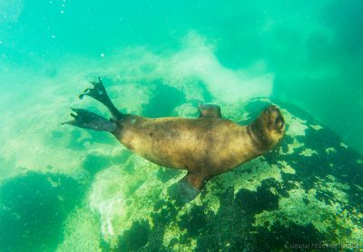 A sea lion in Puerto Madryn