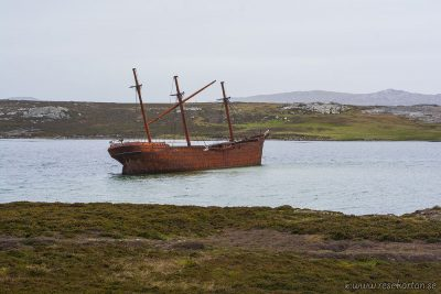 Lady Elizabeth, Falkland Islands