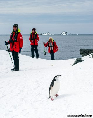 A penguin passing by, Half Moon Island