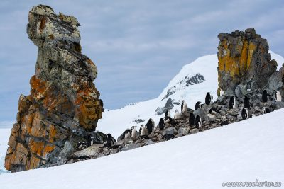 Penguins at Half Moon Island